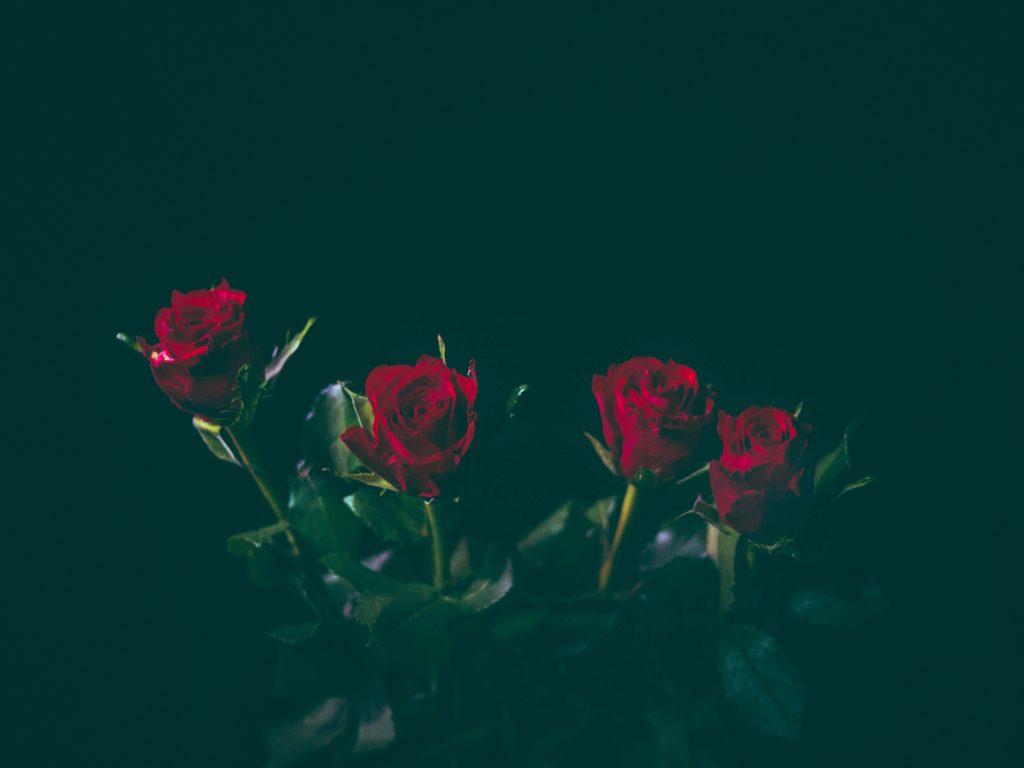 Rose Day Pics 2019
