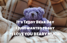 Teddy Day Wishes 2020: SMS, Quotes, Status, Messages